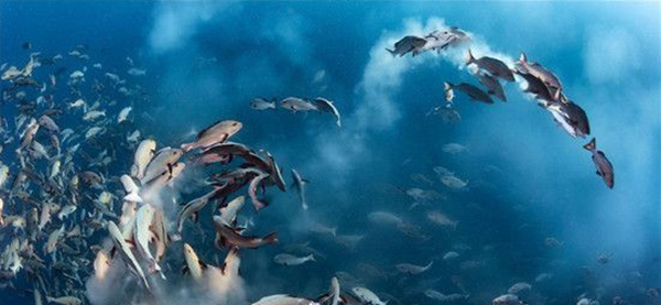 据来源消息报道,野生动物在不受人类干预的情况之下,会表现出动物特有的行为与魅力,自从人类成为地球统治者后,对环境不断的破坏,已到了一个严重的地步,每年都有动物因为环境的改变而面临灭绝边缘,此次摄影大赛除了展现大自然的美丽之外,同时还呼吁人类要爱护这个地球村。